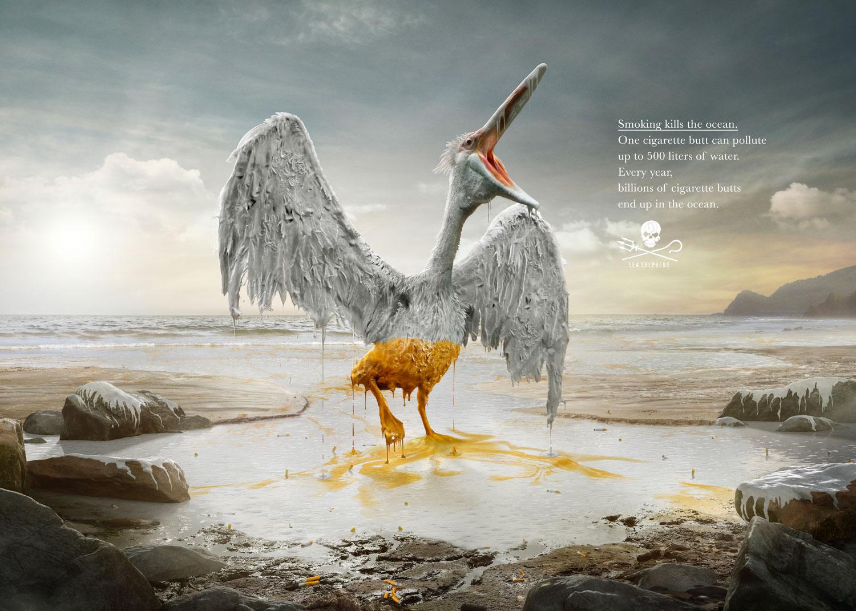34617005_ENVI_SS_pelican_1500